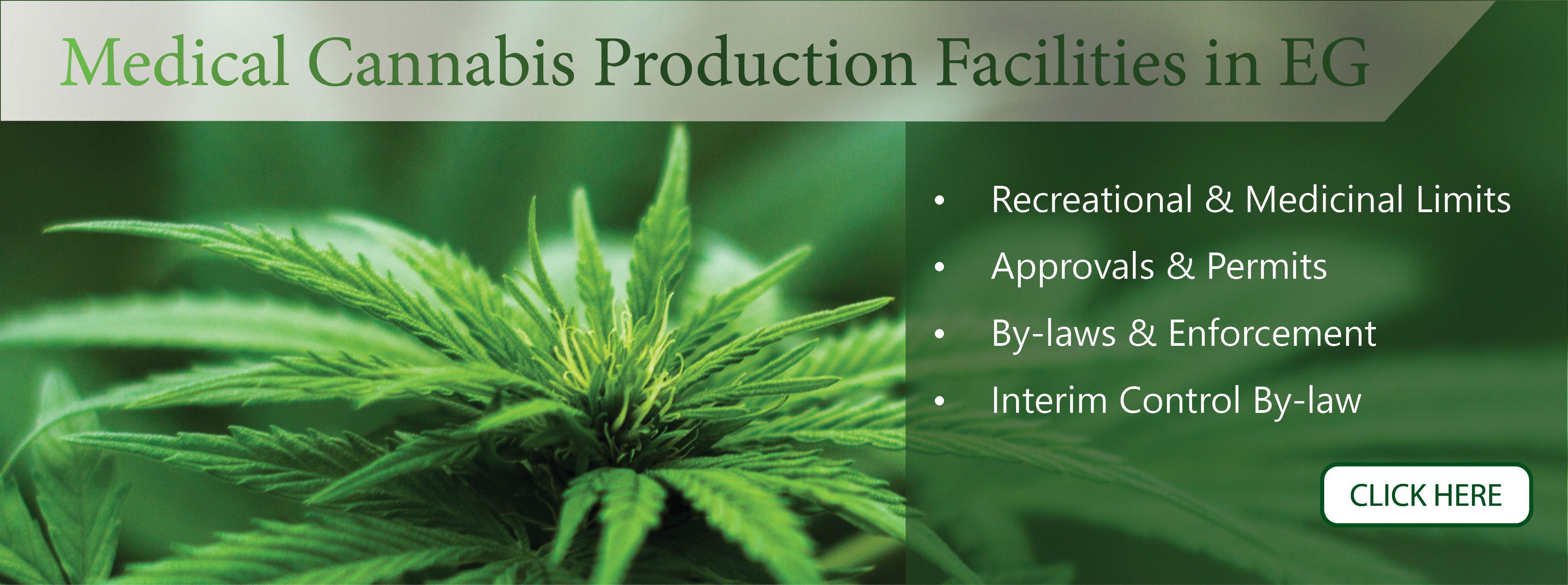 Website Slideshow - Medical Cannabis Production